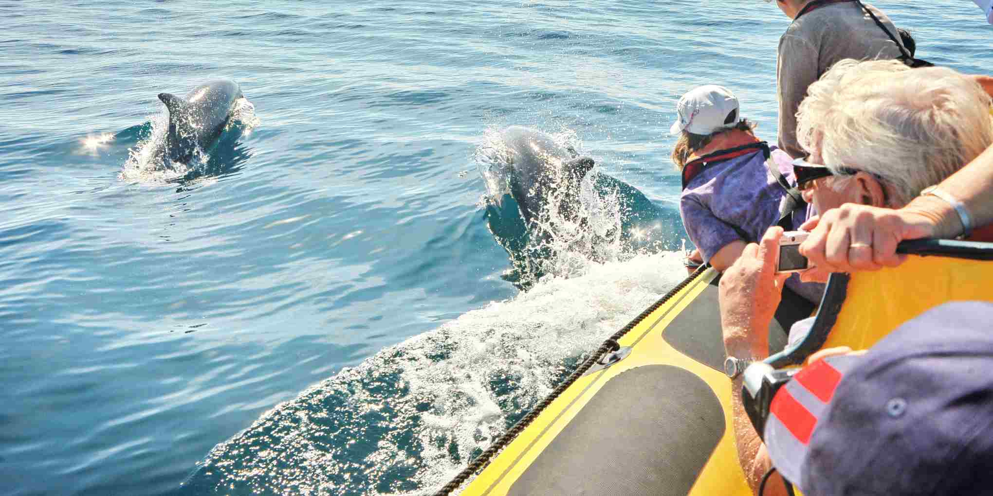 Natación con delfín Algarve