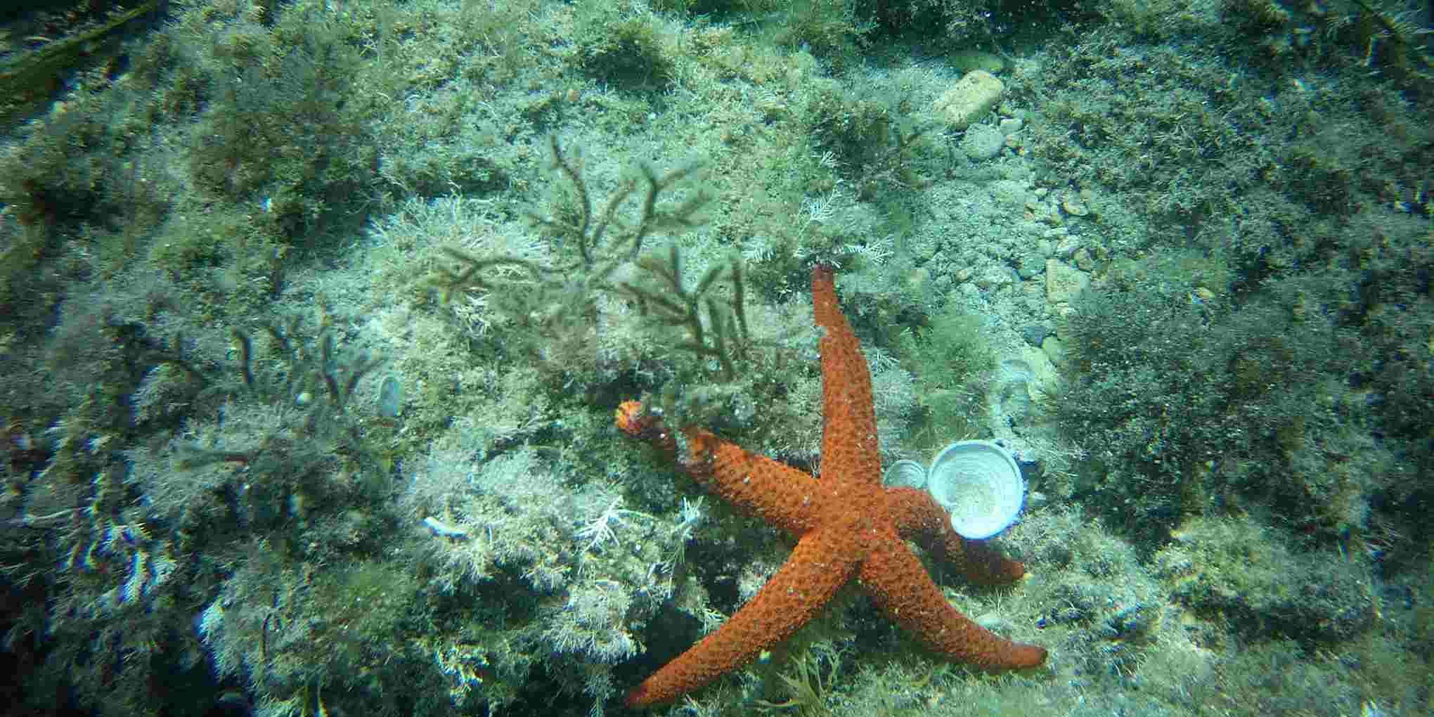 Diving Costa Dorada