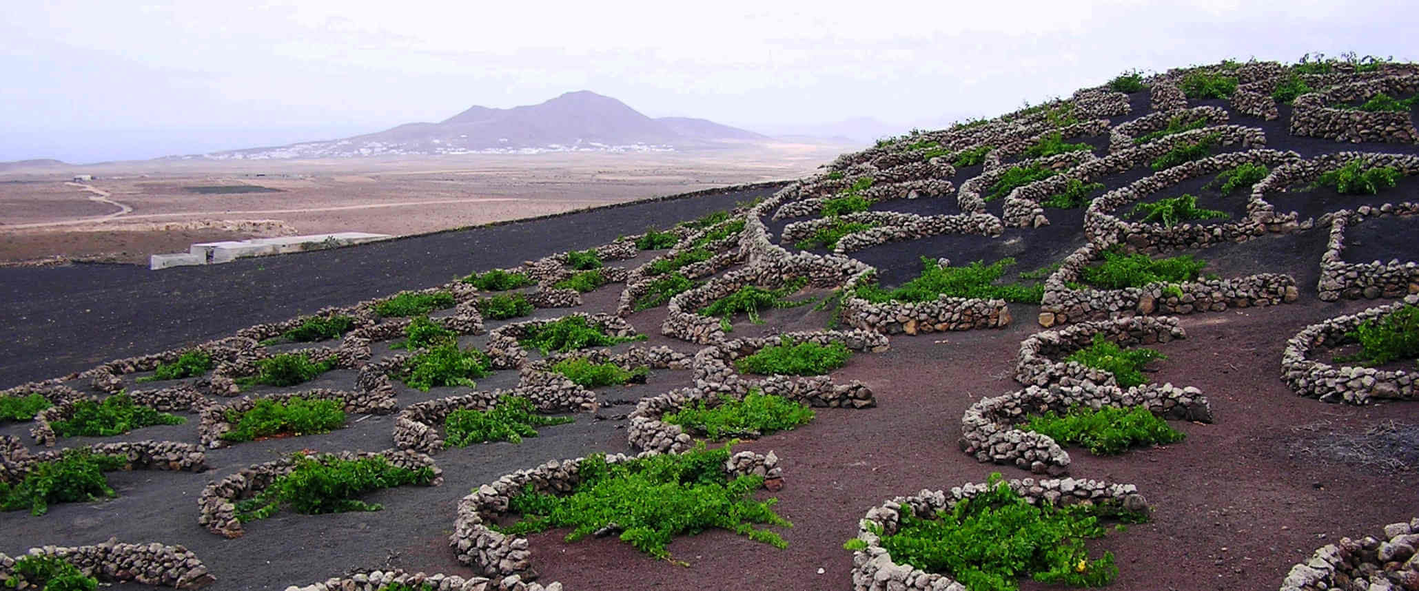 Tour to La Geria in Lanzarote