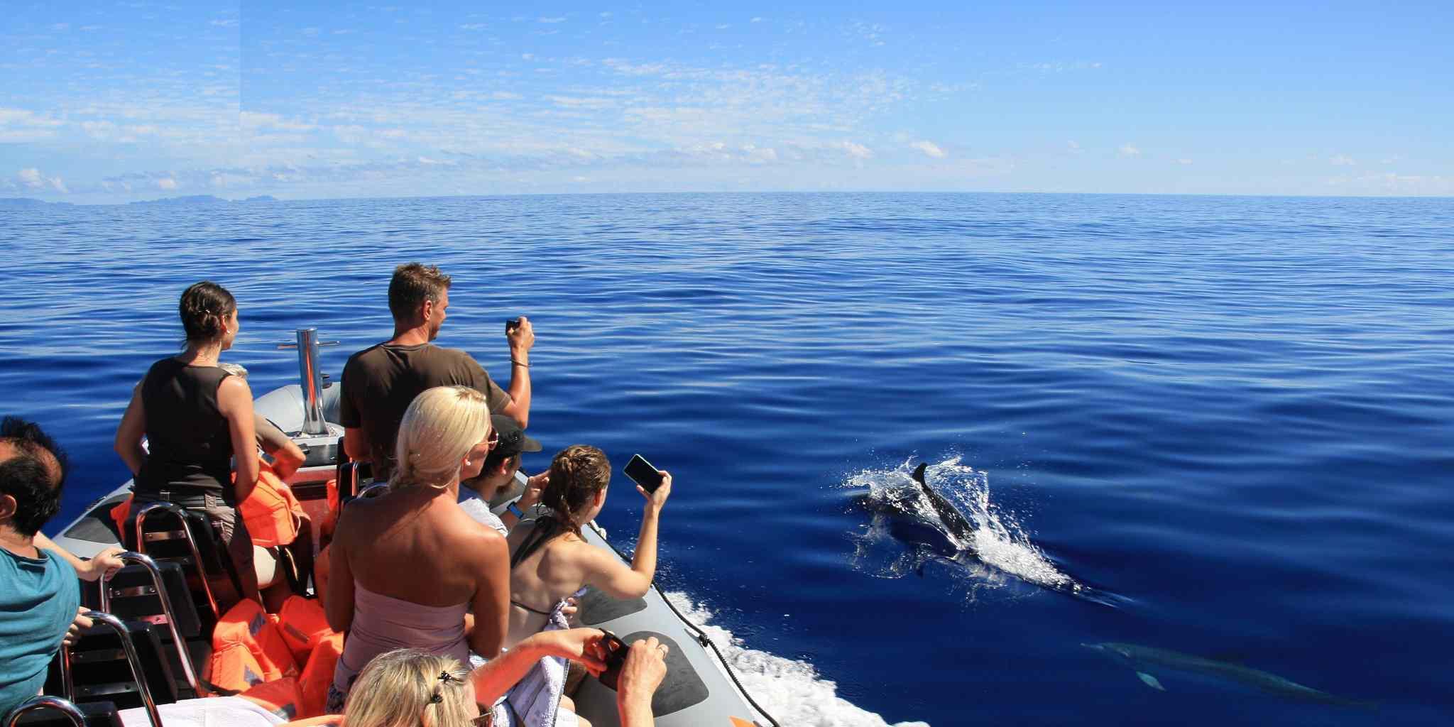Dolphin Tour Madeira
