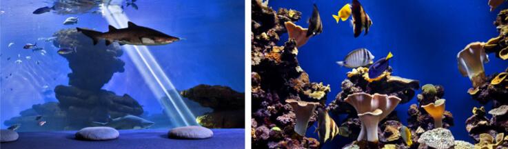 Eintritt Palma Aquarium