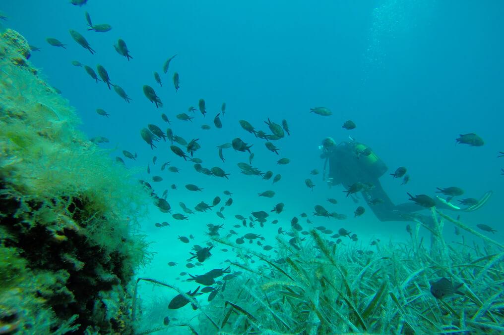 Schnuppertauchen Mallorca Discover Scuba Diving