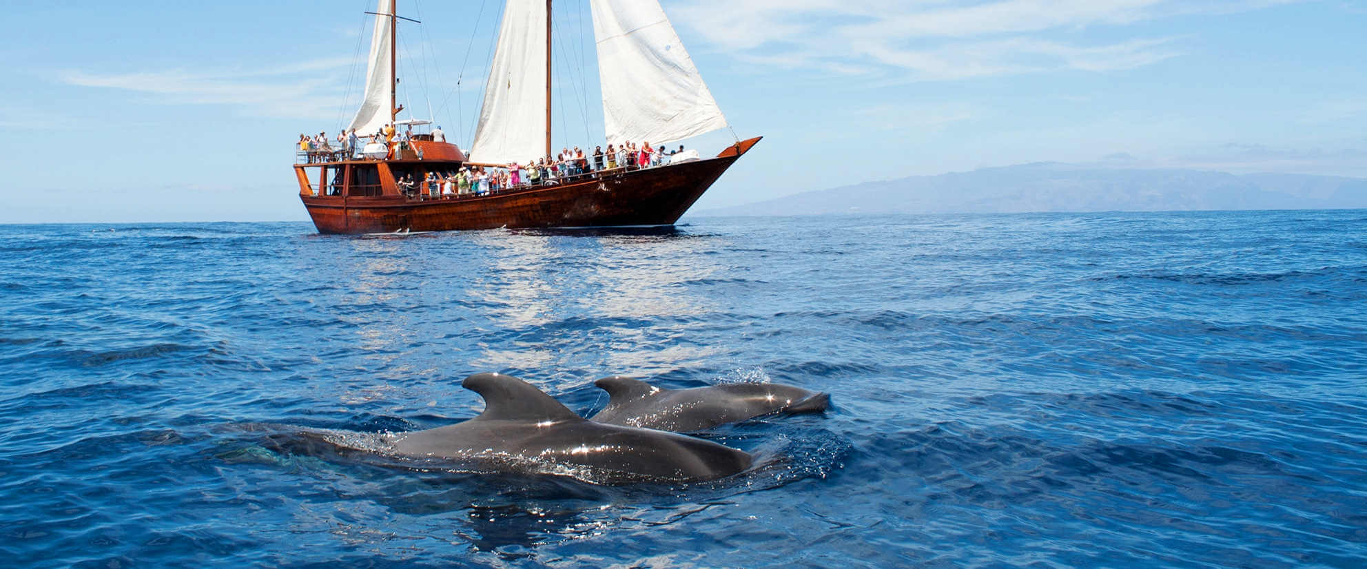 The best boat trips in Tenerife with whale- and dolphin watching