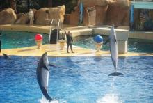 delphine mallorca südwesten