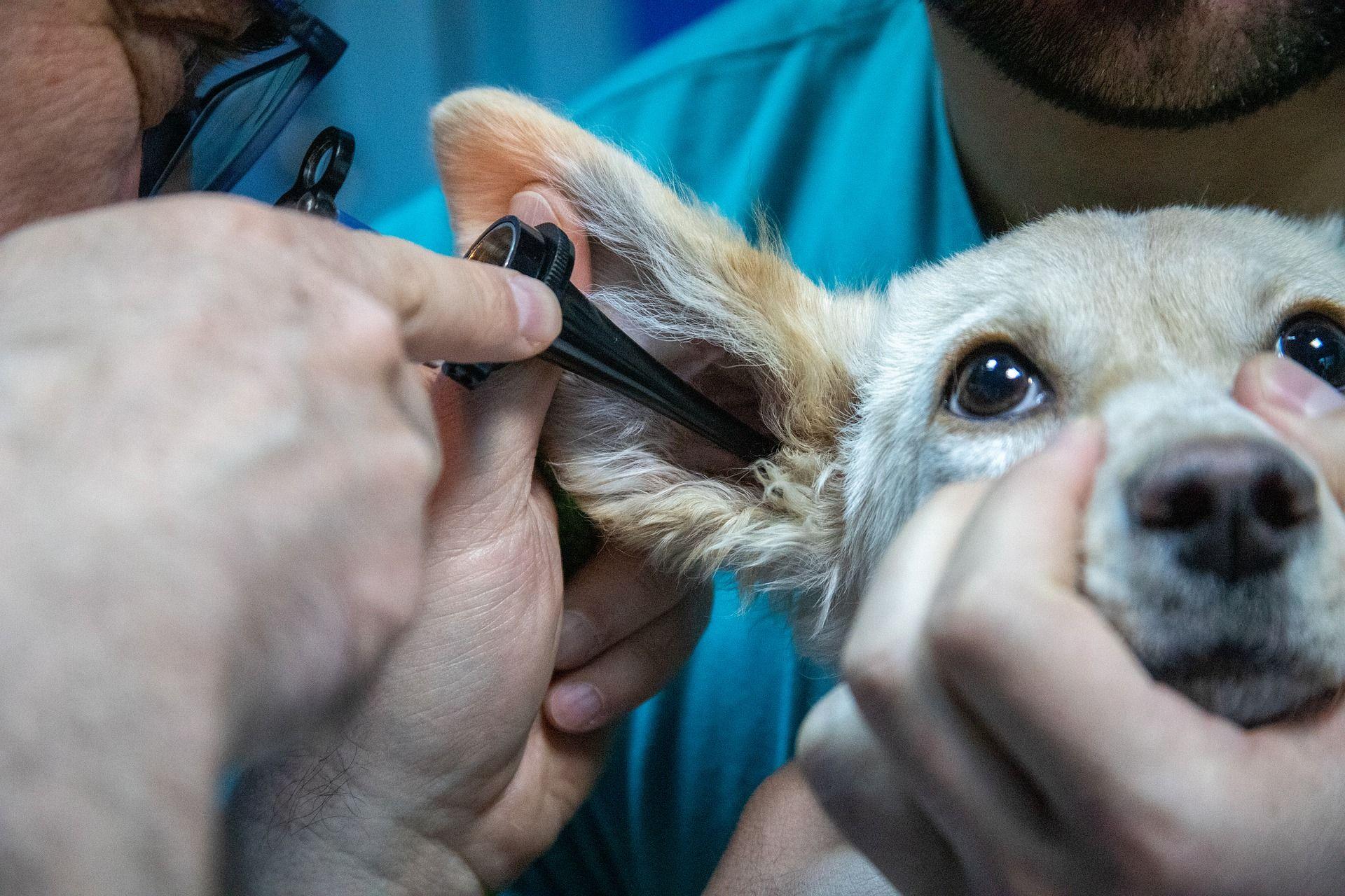 Teneriffa Hund Impfung