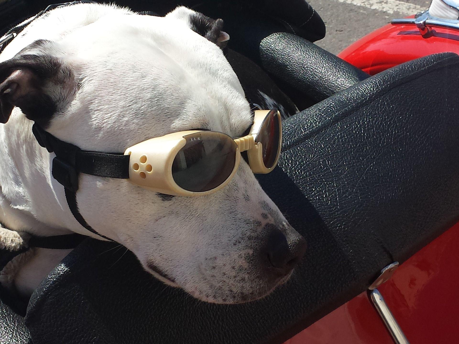 Teneriffa mit Hund und Mietwagen