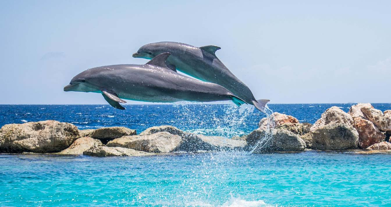 Teneriffa Delfinbeobachtung